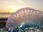 Южные пляжи Испании закрылись из-за ядовитых медуз